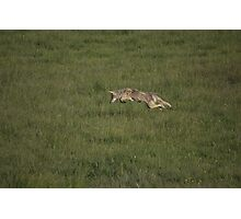 Flying Coyote Photographic Print