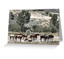 THE GRAZING Greeting Card