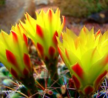Cactus Promise Kept by Susan Bergstrom