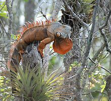 Orange Iguana by dhjorleifsson