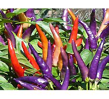 Color of Spice Photographic Print