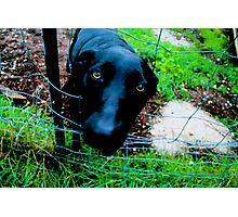 Dog of Doug Photographic Print