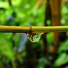 Wet bamboo by John Spies