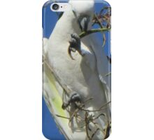cocky in a tree iPhone Case/Skin