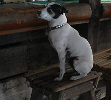 Key West Bar Dog by Margaret  Shark