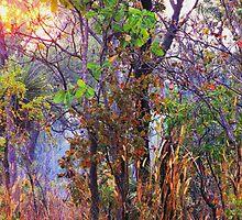 Wild Garden by Sharon Davey
