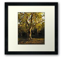 The Grand Father Framed Print