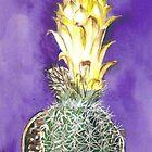 Cactus Fraelea pygmaea by rentia