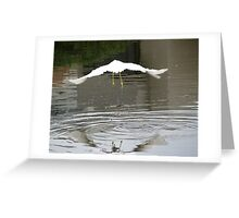 Fly Away...... Greeting Card