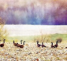 Canada Geese by Christine Belanger