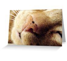 Tigger's Nose Spots Greeting Card