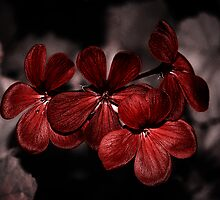 Geranium in Red by Destrier