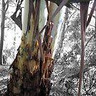ribbon tree by seereise