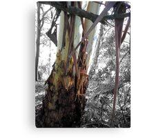 ribbon tree Canvas Print