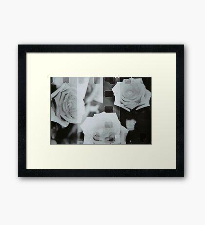 Rose Film Framed Print