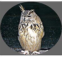 """""""Birds of prey"""" Photographic Print"""