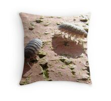 armadillo bugs (woodlice on a brick) Throw Pillow