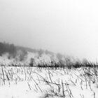 Winter Lines by Alexandra Muresan