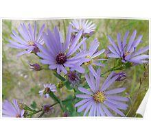 Light Purple Wildflowers Poster