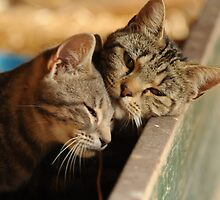 I love you too by Alan Mattison