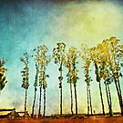 Tall Trees on a Hot Day by Colleen Farrell