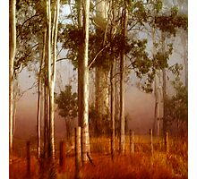 T a l l   Timbers Photographic Print