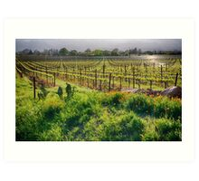Spring Vine and Poppies in Napa Valley Art Print