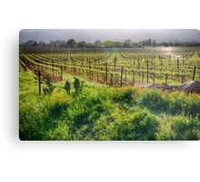 Spring Vine and Poppies in Napa Valley Metal Print