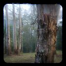 Trees, Yarramalong NSW ttv style by ozzzywoman