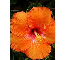 Vibrant Orange Hibiscus Photographic Print