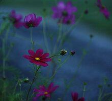 DAWN BLOSSOMS by Lori Deiter