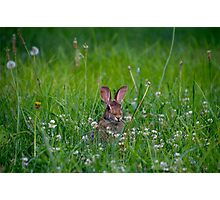 Bunny Rabbit in Grass Photographic Print