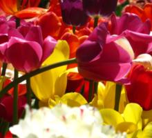 Tulip fantasy Sticker