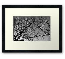 Launceston City Park Framed Print