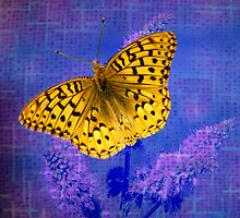 Blazing Bright Butterfly by digitalmidge