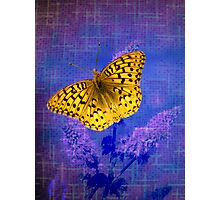 Blazing Bright Butterfly Photographic Print