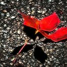 Harbinger of Fall by Brian Gaynor