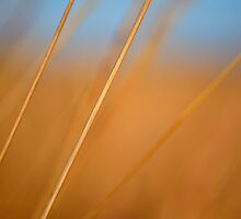 Golden Strands by Brian Gaynor