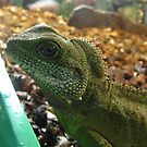 Asian Water Dragon by PhotogeniquE IPA