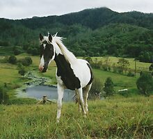 Blue Eyed Tobiano by louisegreen