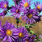Purple Wildflowers by Brian Gaynor
