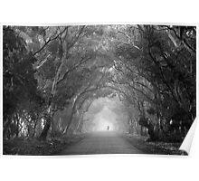 Tree Lane in mono Poster