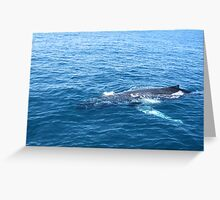 A large Whale Greeting Card