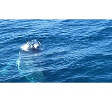Whale Watching Us  Photographic Print