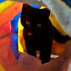 Kitty Play by David Friederich