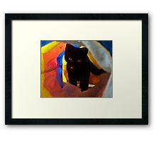 Kitty Play Framed Print