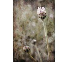 Awakening Photographic Print