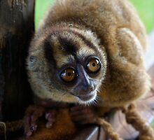 Tarsier? by tomcelroy