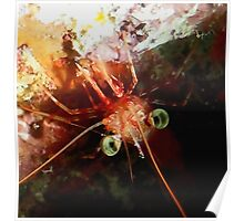 Red Night Shrimp Poster