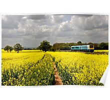 Rapeseed View  Poster